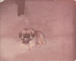 Jin Long - jedna z prvních fotek u nás doma